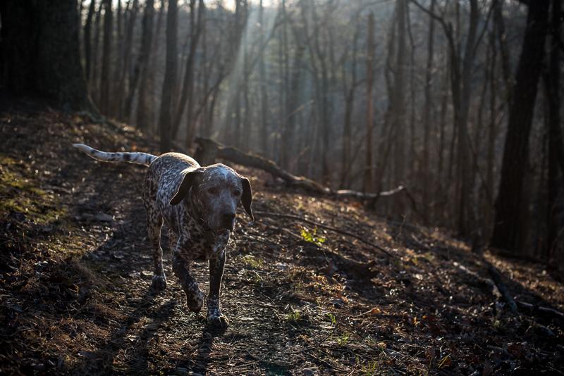 West-Virginia-Hiking-1-of-1